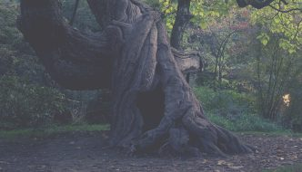 POEM: RED ROOTS